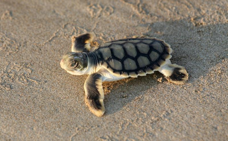 Care for Hedland Turtle Training Weekend