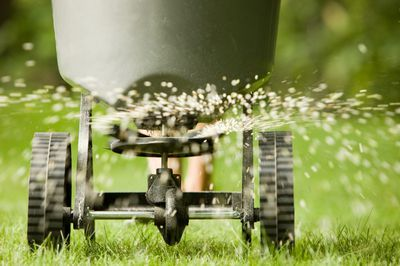 Fertiliser and aeration works to improve soil conditions and growth at